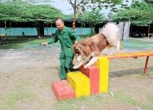 Đơn vị huấn luyện chó cảnh tốt nhất tại Tphcm